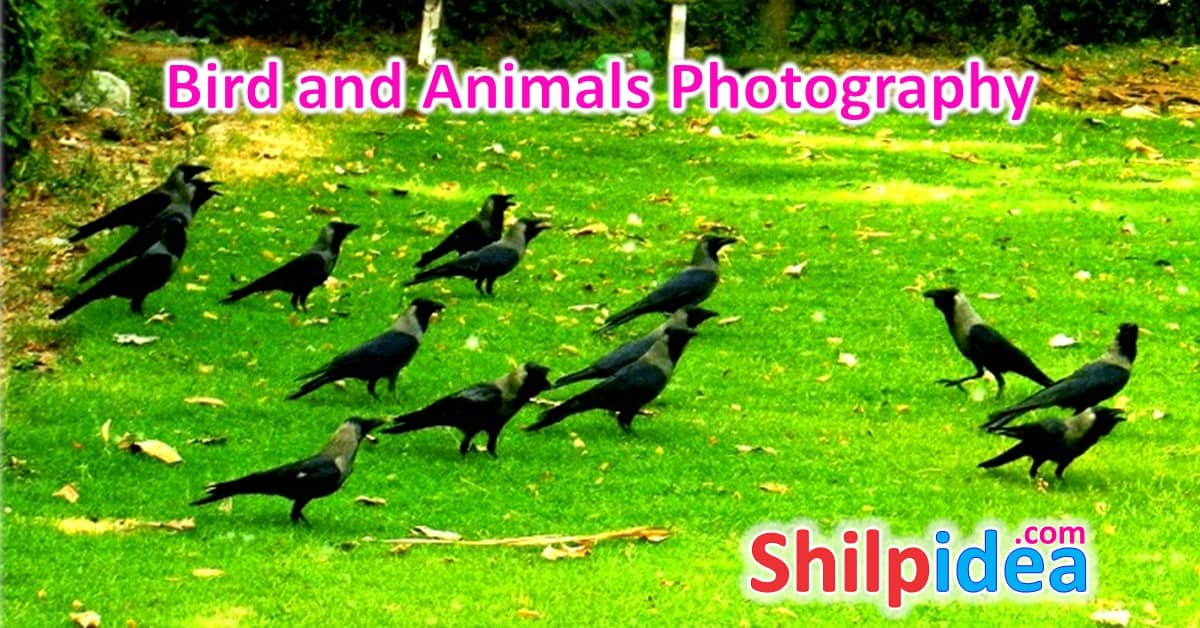 Cute Birds and Animals Photography
