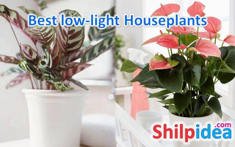 best-low-lights-houseplants-shilpidea