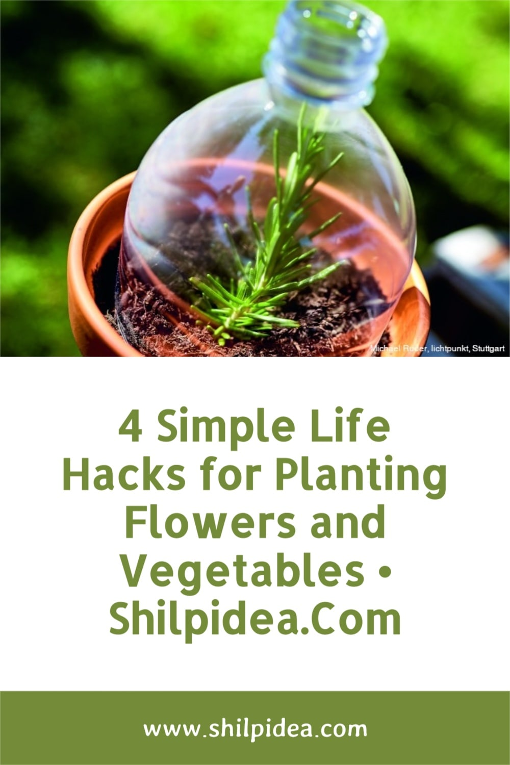 simple-life-hacks-for-gardening-shilpidea-pin