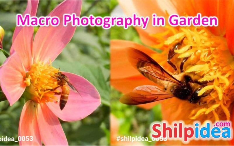 macro-photography-in-garden-shilpidea