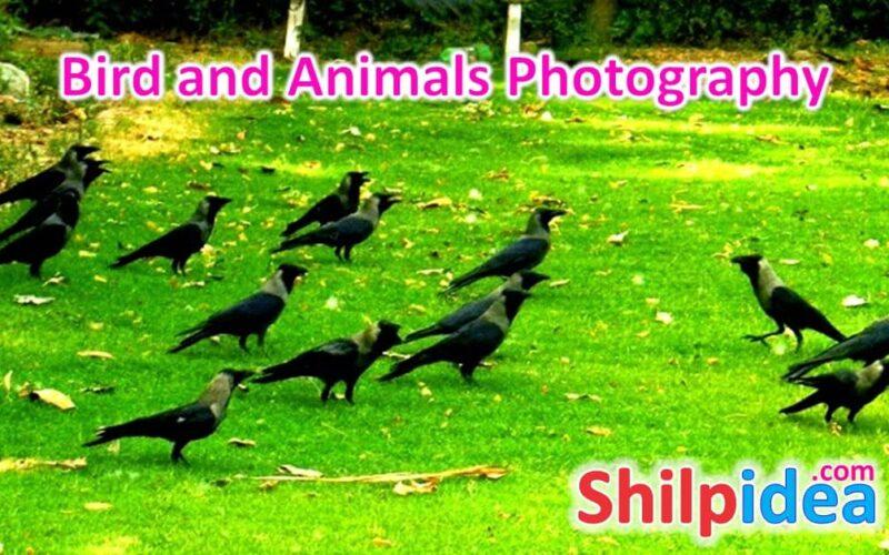 animals-photography-ideas-shilpidea