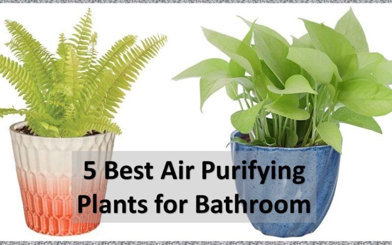 best-air-purifying-plants-shilpidea